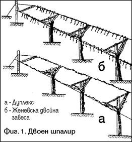 Fig1NS